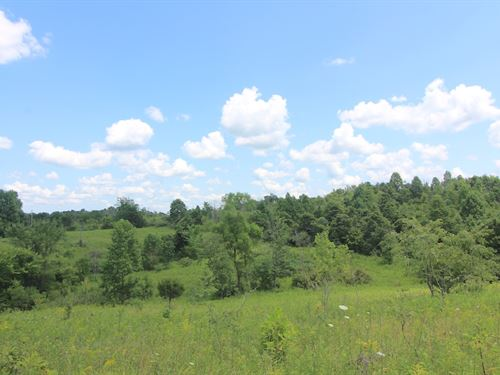 Union Hill Rd, 31 Acres : Blue Rock : Muskingum County : Ohio