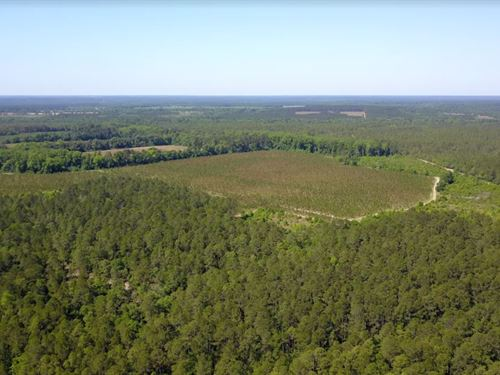Large Timber Tract Loaded With Game : Swainsboro : Emanuel County : Georgia