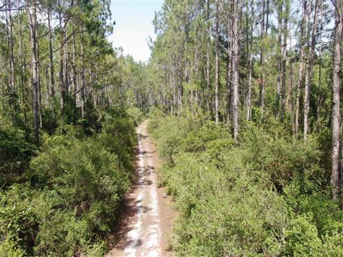 58 Acres Loaded With Wildlife : Perry : Taylor County : Florida