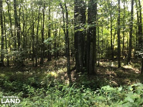 Spurlock Road Hunting Tract : Columbus : Lowndes County : Mississippi