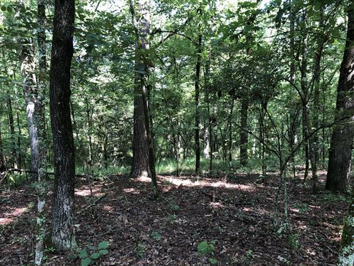 19 Ac, Wooded Homesite, Raymond Ms : Utica : Hinds County : Mississippi