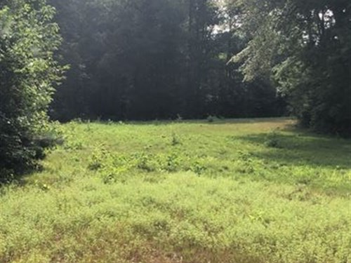 73 Acres Touching National Forest : Plantersville : Chilton County : Alabama