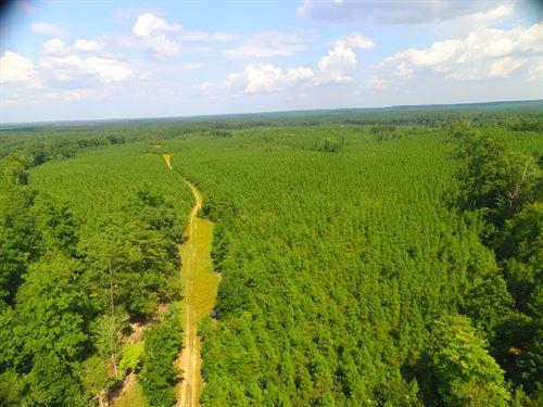 Timber Land & Hunting Tract : Washington : Wilkes County : Georgia