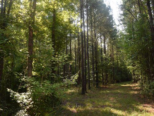 Beautiful Pine / Hardwoods, Creek : Perry : Houston County : Georgia