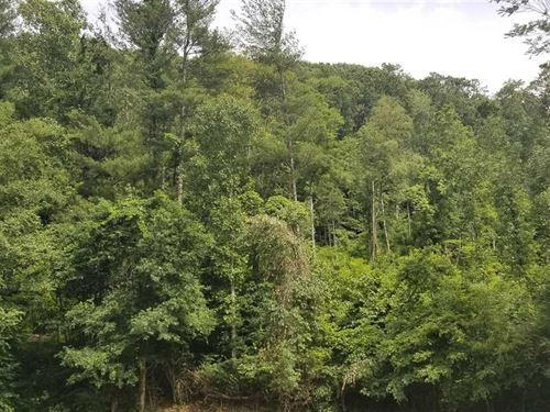 45 Acres With Creek Front in MI : Bakersville : Mitchell County : North Carolina
