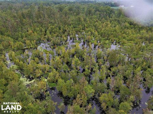 Maysville Timber Tract : Maysville : Onslow County : North Carolina