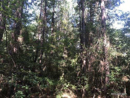16.9 Ac, Pine Timber Tract : Smackover : Union County : Arkansas