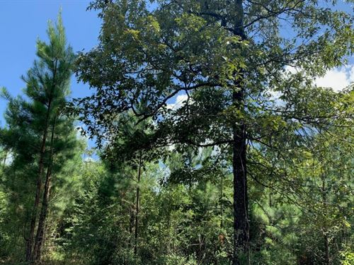 140 Acres In Forrest County In Wigg : Wiggins : Forrest County : Mississippi