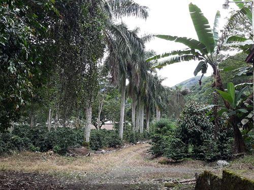 126 Ac, Producing Coffee Farm-Orosi : Orosi : Costa Rica
