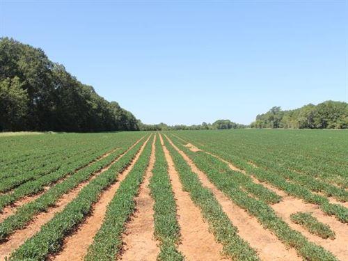 Perry Farms : Lumpkin : Stewart County : Georgia