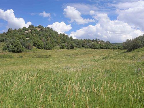 Mountain Property Southwest : Cahone : Dolores County : Colorado