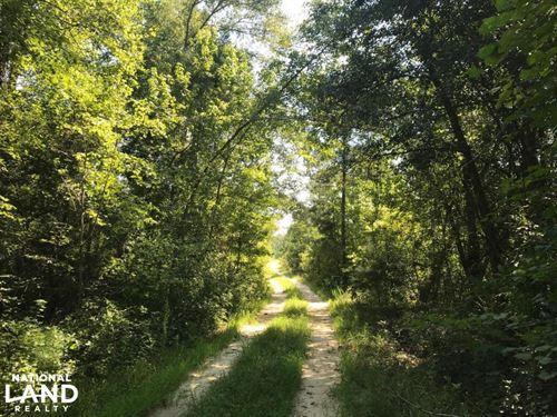 Shaw Timber & Rec Land : Manning : Clarendon County : South Carolina