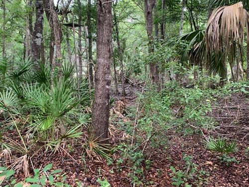 20 Acres Hwy 345, Chiefland, FL : Chiefland : Levy County : Florida