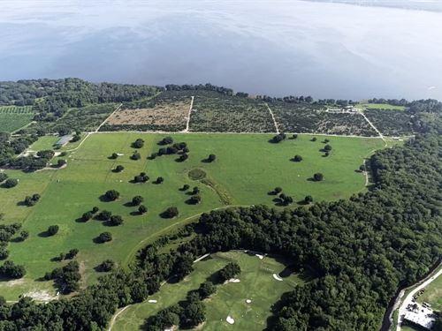 260 Acres In Lake County : Yalaha : Lake County : Florida