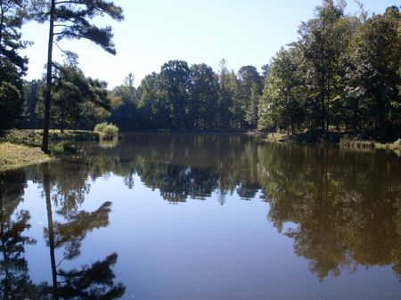294.404 Acres : Greenville : Meriwether County : Georgia