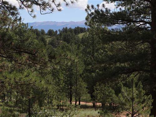 Ponderosa Paradise : Guffey : Park County : Colorado