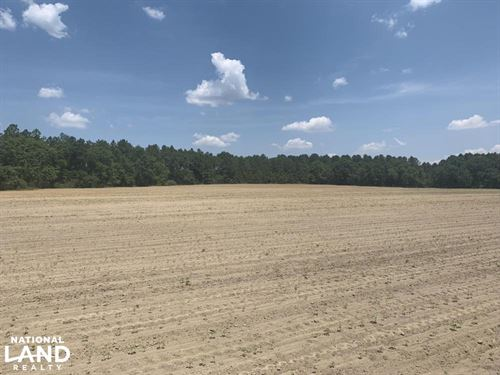 The Boggy Branch Farmland And Hunti : Graceville : Holmes County : Florida