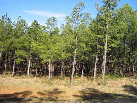 Steal Of A Deal Hunting Retreat : Carlton : Oglethorpe County : Georgia