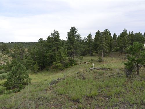 Awesome 5Ac Treed Cabin Lot +A12-27 : Weston : Las Animas County : Colorado