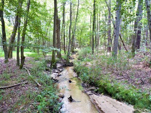 Beech Creek : Sumter : South Carolina