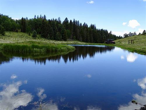 Upper Montane Dream : Tres Piedras : Rio Arriba County : New Mexico