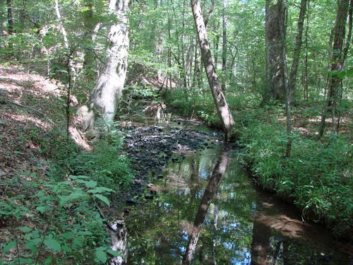 Rural Home Sites, Timber & Hunting : Vincent : Shelby County : Alabama