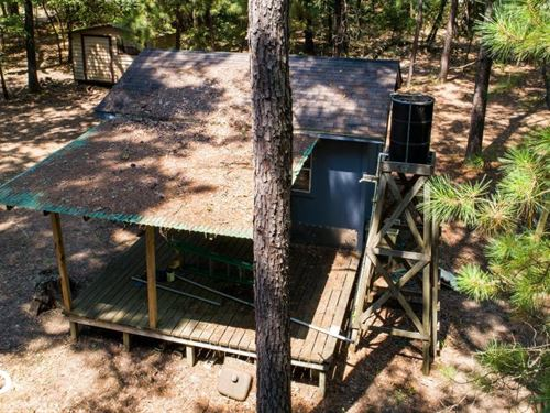36 Acre Timber Tract With Hunting : Avery : Red River County : Texas