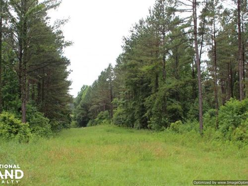 Exceptional Deer, Turkey And Timber : Rosebloom : Tallahatchie County : Mississippi