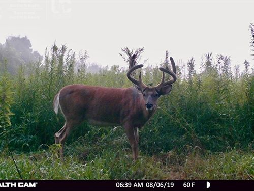 Impeccable Hunting Land Richland : Viola : Richland County : Wisconsin