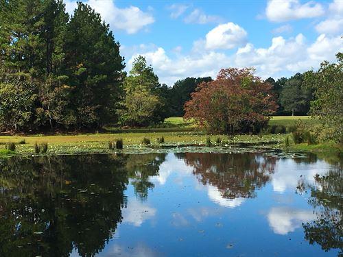285 Acres Coley Creek Ranch : Shepherd : San Jacinto County : Texas