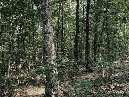 Chesney Farms Tract 7 : Graysville : Bledsoe County : Tennessee