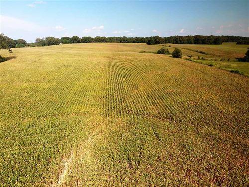30 Acres of Farmland Near Greenhil : Killen : Lauderdale County : Alabama