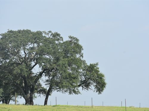 11 Acres S Of Austin, Financing : Luling : Caldwell County : Texas