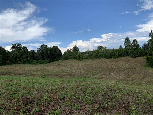 Beautiful Pasture Shade Trees : Long Creek : Oconee County : South Carolina