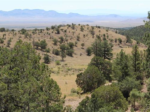 Rosedale Mine : Magdelena : Socorro County : New Mexico