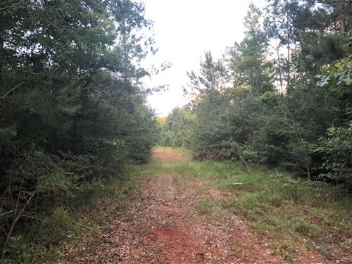 40 Acres, Pearl River County : Poplarville : Pearl River County : Mississippi