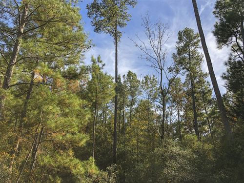 22 Acres New Waterwood Tr 3 : Huntsville : San Jacinto County : Texas