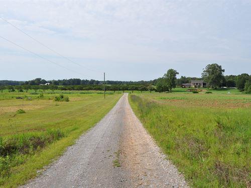 Beautiful Mature Timber & Row Crop : Fayette : Alabama