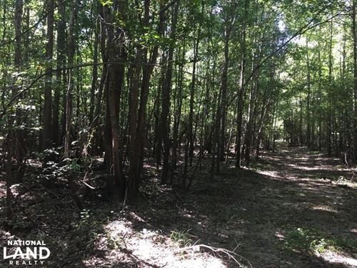 Southwest Louisiana Deer Hunting Pr : Starks : Calcasieu Parish : Louisiana