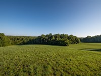 Towering Hardwoods & Hay Fields : Reidsville : Caswell County : North Carolina