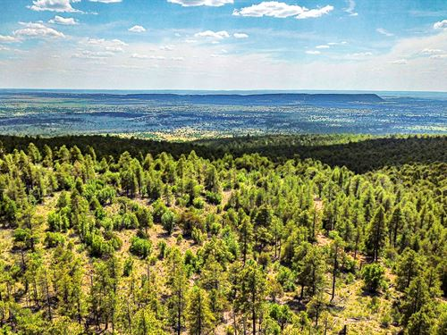 Borders National Forest Land : Ramah : Cibola County : New Mexico