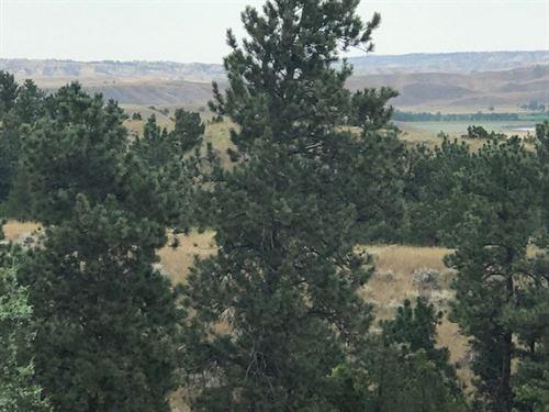 Sage Creek Property : Winnett : Petroleum County : Montana