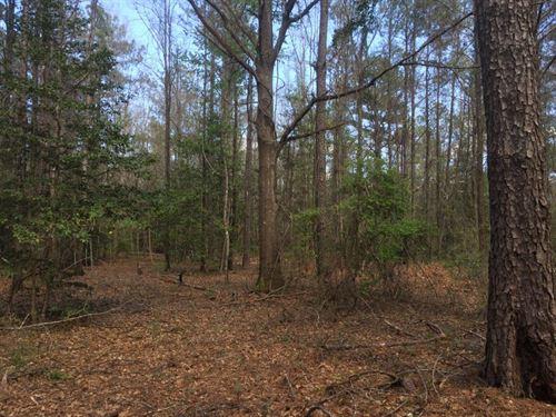 Wooded Acreage Near Troy : Brundidge : Pike County : Alabama