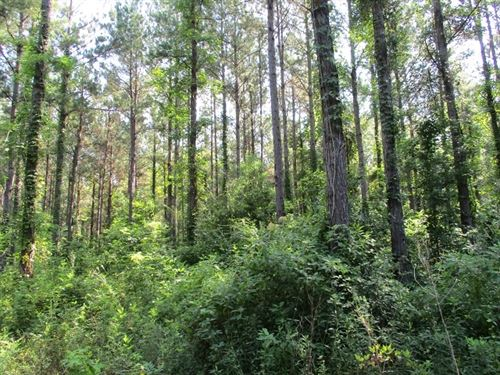 115.59 Acres in Pine Hill, AL : Pine Hill : Marengo County : Alabama