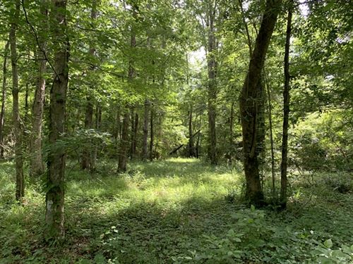 65.73 Acres in Sumrall, MS : Sumrall : Marion County : Mississippi