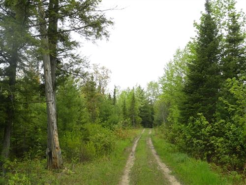 40 Acres in Manistique, MI : Manistique : Schoolcraft County : Michigan