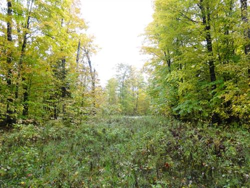 47 Acres in Newberry, MI : Newberry : Schoolcraft County : Michigan