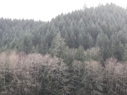 77.63 Acres in Veneta, OR : Veneta : Lane County : Oregon