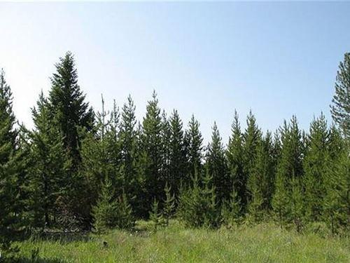 11.60 Acres in Kalispell, MT : Kalispell : Flathead County : Montana