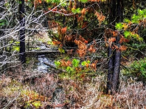 203.18 Acres in Kalispell, MT : Kalispell : Flathead County : Montana